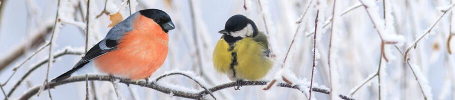 Top Winter Survival Tips For Your Garden Birds